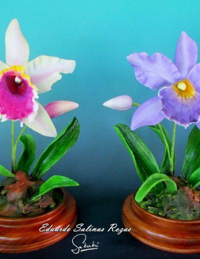 Variedad de Orquídeas.